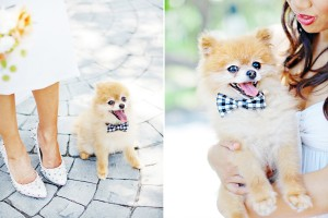 Wedding-Dog-Bow-Tie-DIY